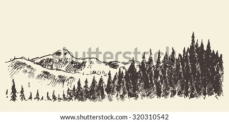 hand drawn landscape with fir