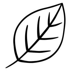 Hand drawn leaf. Doodle. Ecology concept. Isolated on white background. Vector illustration.