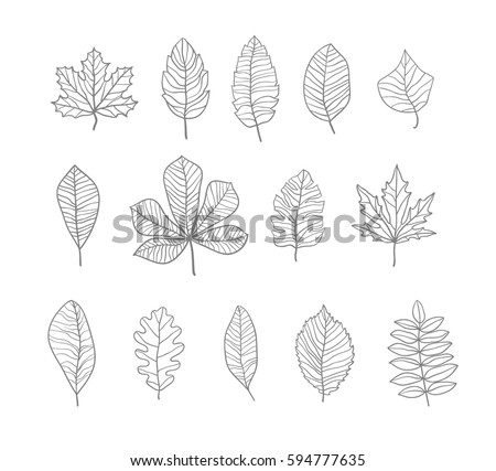 Hand drawn leaves contours set. Vector illustration.