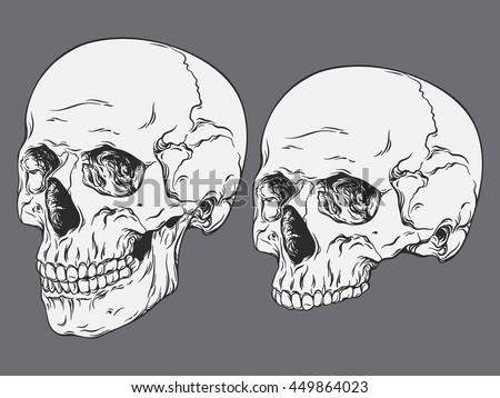 Hand drawn line art anatomically correct human skulls set isolated vector illustration