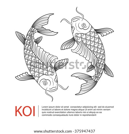 hand drawn line art of koi carp