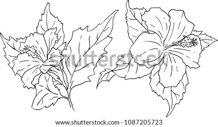 hand drawn line art set of two