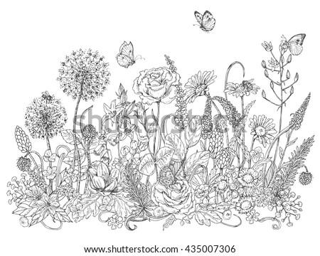 hand drawn line illustration