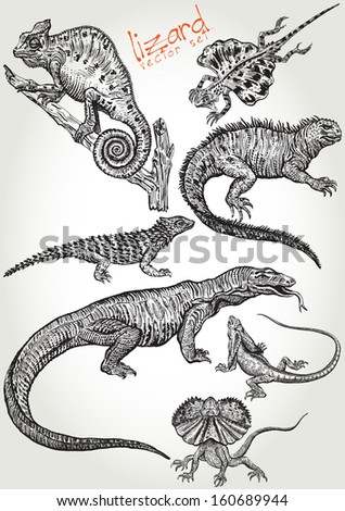 hand drawn lizard vector set
