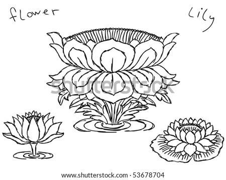 stock vector Hand drawn lotus flowers Vector