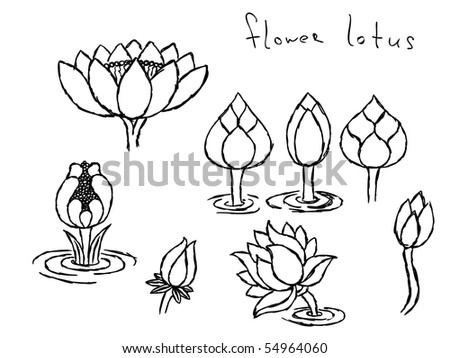 Picture Lotus Flower on Hand Drawn Lotus Flowers Vector  Visit My Portfolio For Big Collection