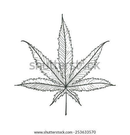 hand drawn marijuana leaf