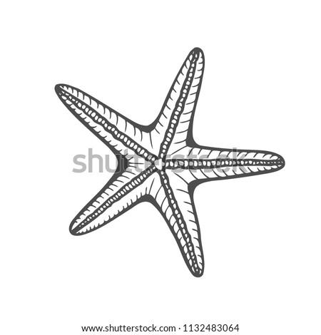 Hand drawn marine Starfish nature ocean aquatic underwater vector. Engraving illustration on white background