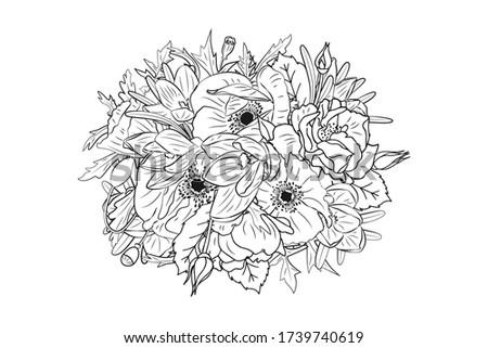 hand drawn monochrome crocus