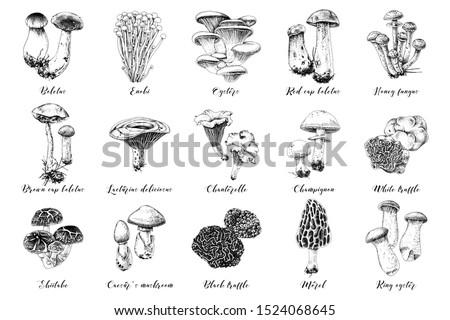 Hand drawn mushrooms collection. 15 types of edible mushrooms. Vector illustration