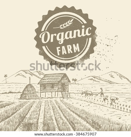 hand drawn of farmers at rice