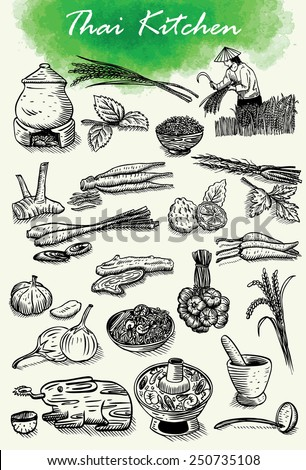 hand drawn of thai herbs and