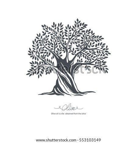 Hand-drawn olive tree. Vector sketch illustration