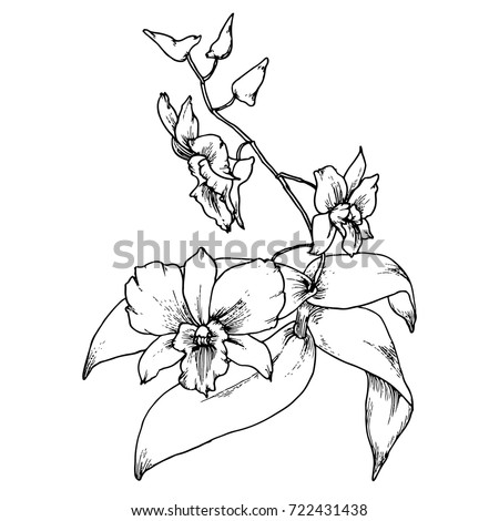 Hand drawn orchid branch with buds and leaves in vintage engraving style for wedding invitation and greeting card. Vector illustration.