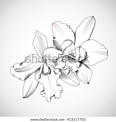 hand drawn orchids flowers