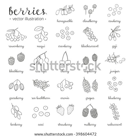 hand drawn outline berries