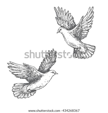 hand drawn pair of flying doves