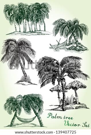 hand drawn palm tree vector set