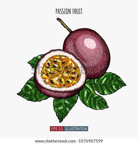 Hand drawn passion fruit isolated. Template for your design works. Engraved style vector illustration.