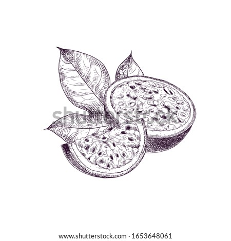 Hand drawn passion fruit. Set sketches with cut passion fruit and leaf. Vector illustration isolated on white background.
