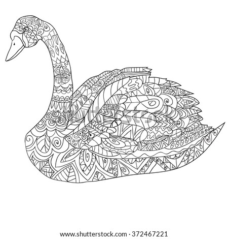 hand drawn peacock . isolated...