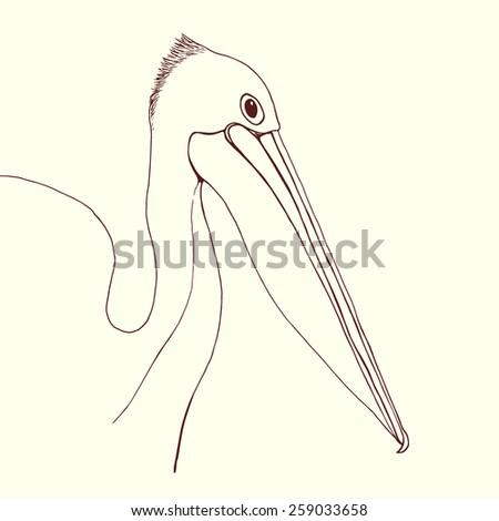 hand drawn pelican portrait