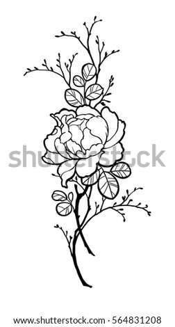 hand drawn peony rose flower