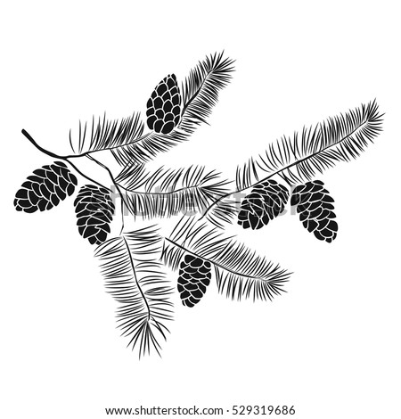 Hand drawn pine tree branch isolated on white background. Ink illustration in vintage engraved style