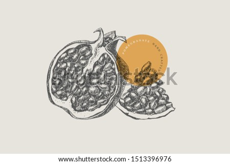Hand-drawn pomegranate on light isolated background. Natural fruit in sectional view. Can be used for restaurant menu design, cafe, product packaging and cosmetics design. Vector vintage illustration.