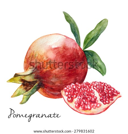 hand drawn pomegranate
