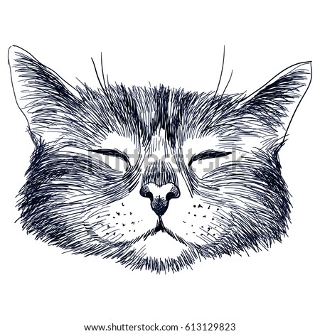 hand drawn portrait of cat