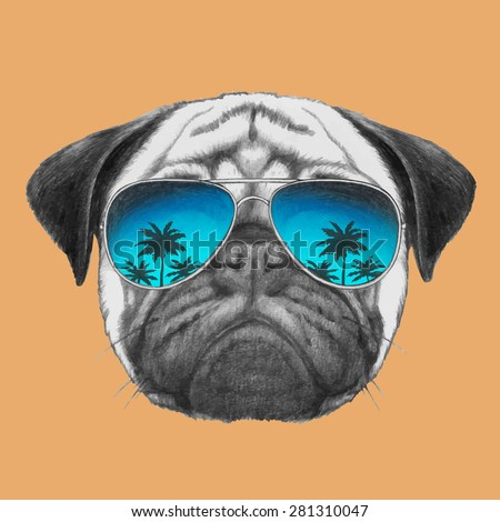 hand drawn portrait of pug dog