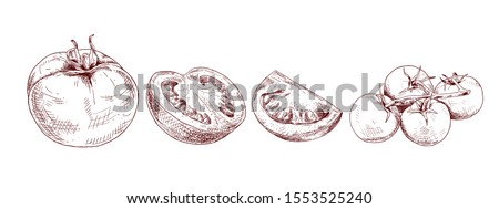 Hand drawn red tomato. Set sketches with cut tomato, slice of tomato and tomatoes branch. Vector illustration isolated on white background.