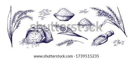 Hand drawn rice. Organic cereal in bag and rice porridge in bowl, sketch doodle set of wild jasmine steamed and basmati rice. Vector outlined illustrations rice plant and grains