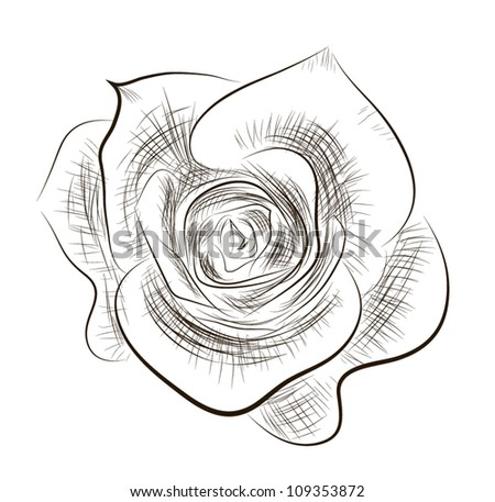 Hand drawn rose vector