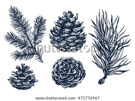 Hand drawn rustic design vector elements. Forest collection of coniferous branches and pine cones isolated on white background. Highly detailed ink art in engraved style