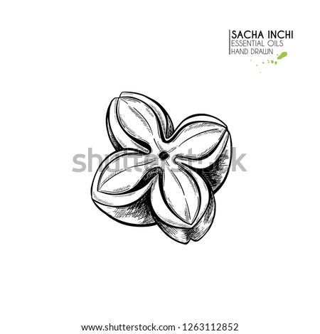 Hand drawn sacha inchi star capsula. Engraved vector illustration. Medical, cosmetic plant. Moisturizing serum,essential oil. For cosmetics, medicine, treating, aromatherapy package design skincare. Foto d'archivio ©