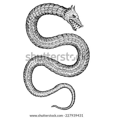 hand drawn sea serpents   sea