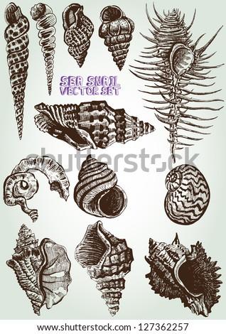 hand drawn sea snail vector set
