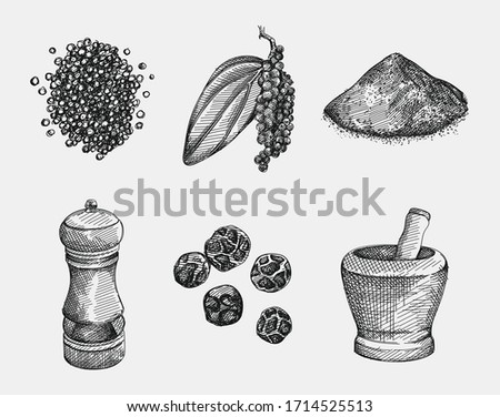 Hand-drawn set of black pepper. Handful of pepper, peppercorns, pepper powder, pepper branch with a leaf, grinder, bowl for spice grinding. Spice and seasoning