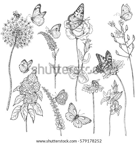 Hand drawn set of butterflies, bees and wildflowers.