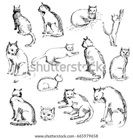 hand drawn set of cats cats in