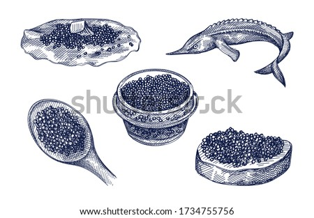 Hand-drawn set of caviar. Caviar on a spoon, in a glass jar, on a bread slice, on a pancake, ossetra fish. Black caviar. Sea food. Caviar canapé  Photo stock ©
