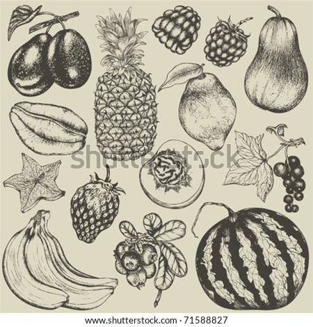 Hand-drawn set of fruit and berries