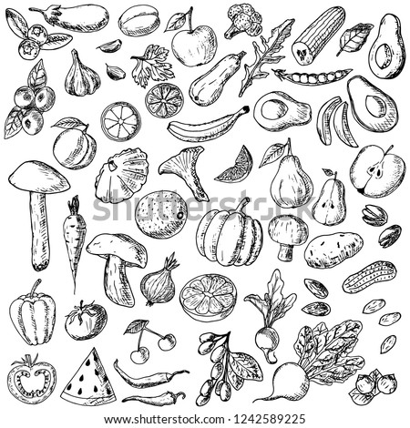 Hand-drawn set of fruits, vegetables, mushrooms and berries. Vector cartoon sketches. Isolated objects on a white background. Vegetarian collection. Fresh food. Elements of menu. #1242589225