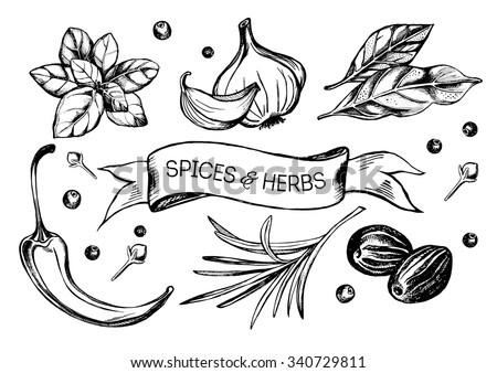 Hand drawn set of herbs and spices - garlic, hot pepper, bay leaf, basil, nutmeg, cloves, rosemary, black pepper. Vector Illustration.