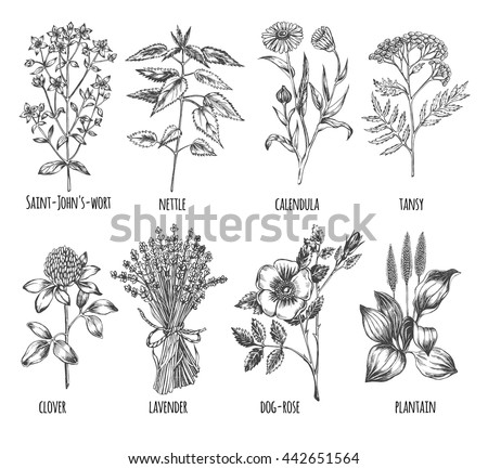 hand drawn set of herbs
