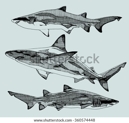 hand drawn sharks vector