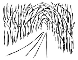 Hand-drawn simple vector sketch with black outline. Landscape, nature, road, path through a dense, overgrown forest, alley of dark trees, tunnel, light at the end.