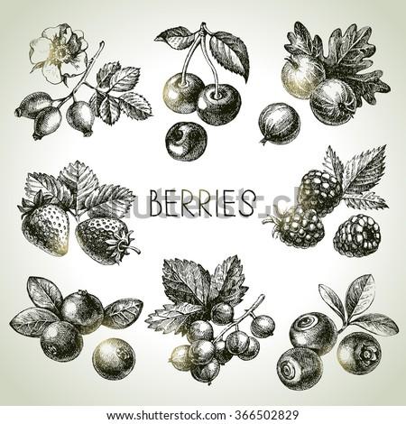 hand drawn sketch berries set